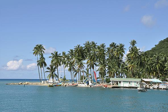 Sainte-Lucie plage cocotier